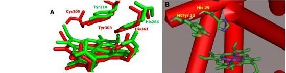 生物物理所在金属蛋白理性设计研究方面获得进展